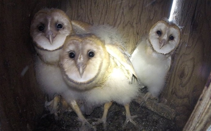 Video of BARD Barn Owl Workshop